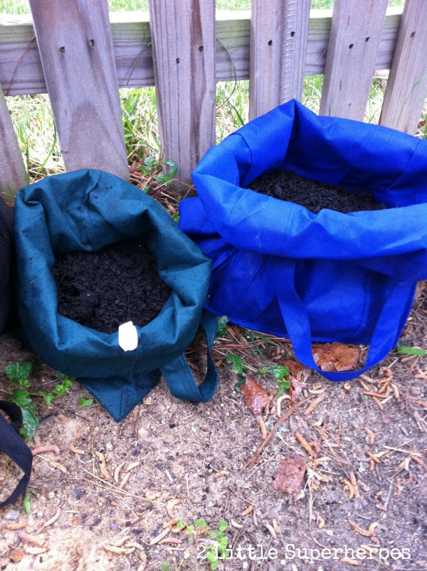 growing potatoes for free Growing Potatoes in Bags
